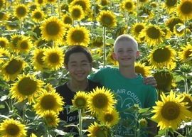 Homestay in Kansas Sunflowers